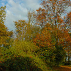 salvaraja-autunno