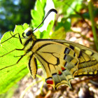 salvaraja-farfalla