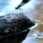 salvaraja-libellula-con-riflesso